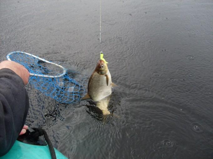 в какую погоду клюет рыба летом