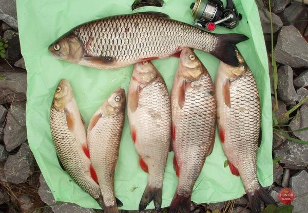 как сохранить улов рыбы на рыбалке