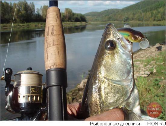 прикормка для угря русская рыбалка