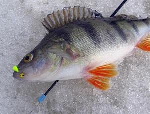 при каком давлении клюет рыба зимой окунь