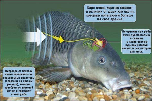 клюет ли рыба днем