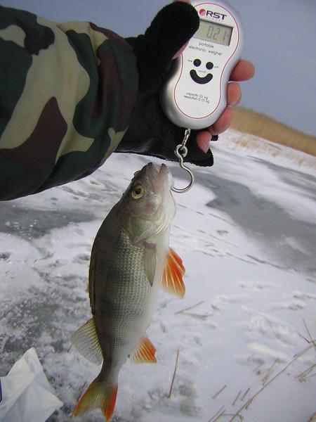 рыбалка и погода для начинающих