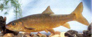 маринка илийская рыбалка