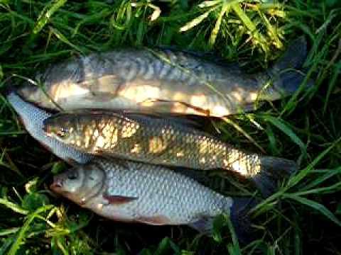 рыбалка в ждановском