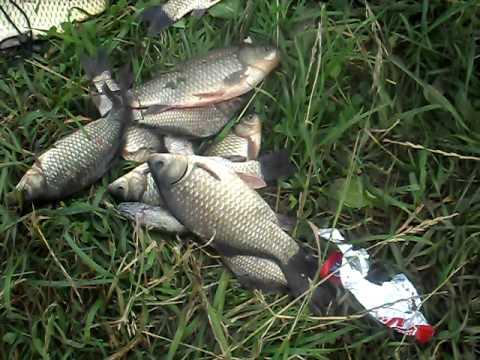 видео отчет о рыбалке карася