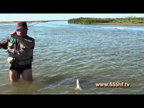 рыбалка на каспийском море на белугу