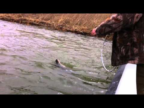 рыбалка в астраханской области 2017 видео