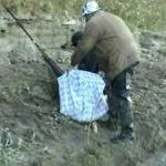 ловля сазана весной на ахтубе видео