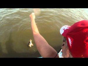 ловля фидером видео под водой