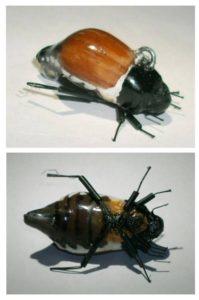 вяжем жуков для нахлыста