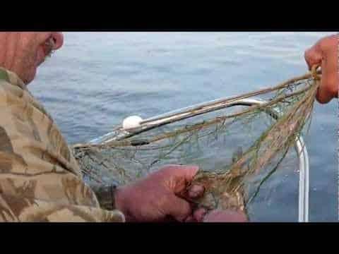 ловля леща сетями весной видео
