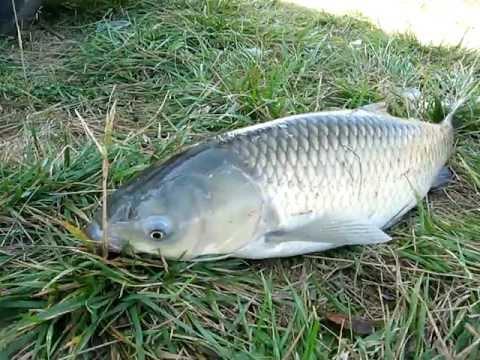 амур рыбалка в октябре