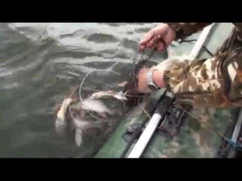 ловля сазана в красноярске