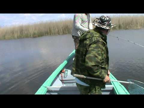 ловля сома на квок в кременчуге