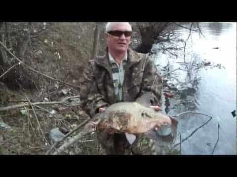 лещ на москва реке видео