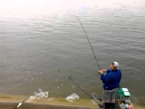 рыбалка на судака фидером