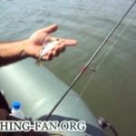 ловля стерляди на спиннинг видео