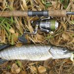 какую рыбу ловить осенью